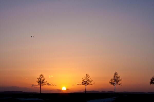 夕陽に向かって飛ぶ