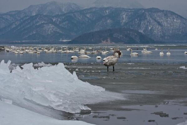 屈斜路湖の吹き寄せ氷