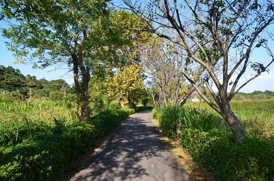20140928手賀沼お散歩 (1)