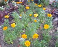 20111003 花