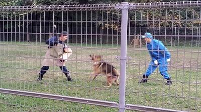 20141104警察犬01