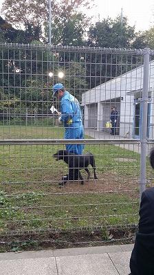 20141104警察犬02