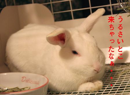 7_20120606113817.jpg
