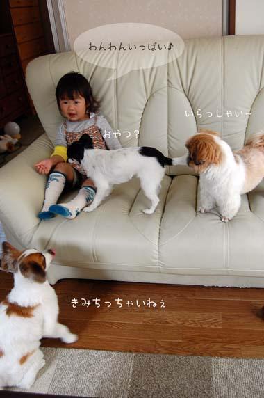 DSC_0038a_20100531215843.jpg