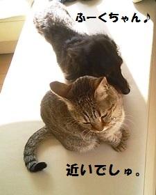 99_marofuku1_131203.jpg