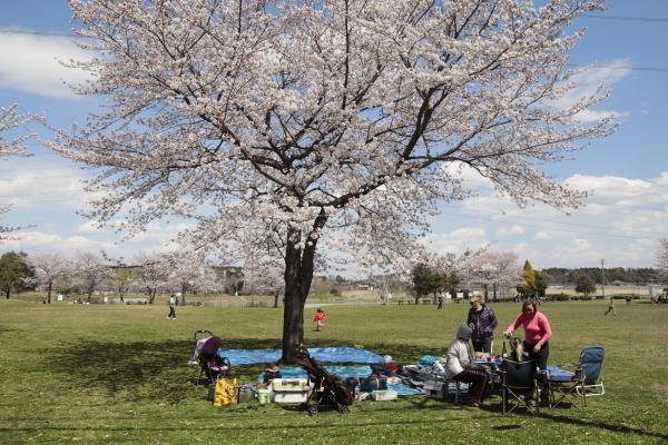 桜と外人さん120412
