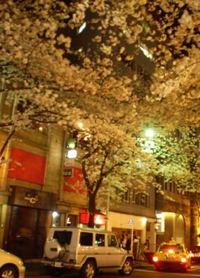 401夜桜2