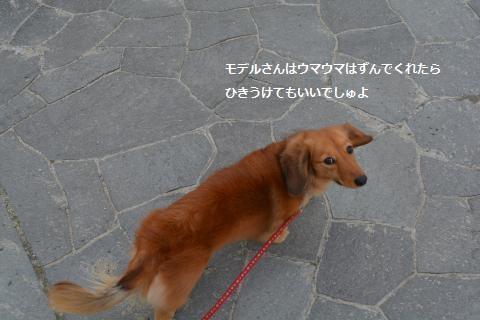 2014_0113_132950-DSC_0072_convert_20140118122532.jpg