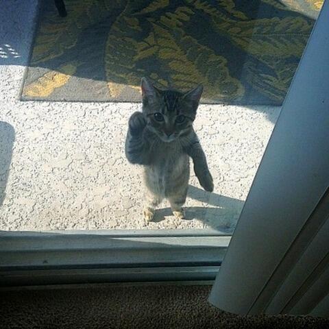 こんこん開けて下さい