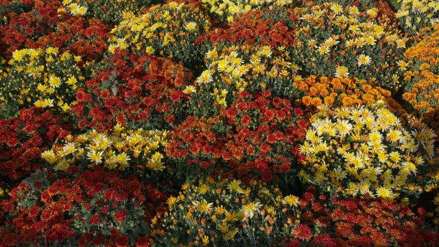 秋のリュクサンブール公園:花