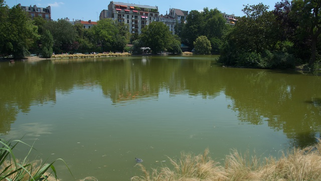 夏のモンスーリー公園