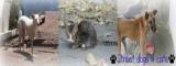 Street dogs  catsバナー