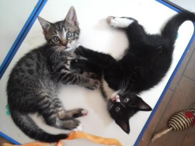 2010071010550002miko猫