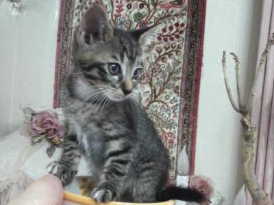 2010071308050001miko猫