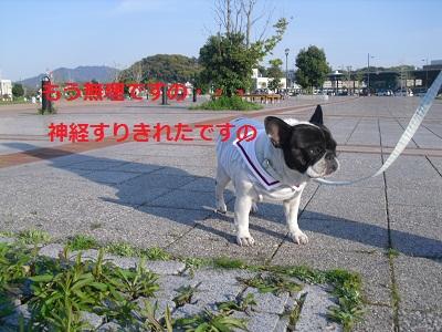 2010_0425_171034-CIMG0454.jpg