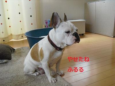 2010_0513_161430-CIMG0550.jpg