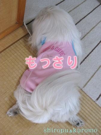 IMG_04315.jpg