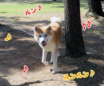 b_20141026_32.jpg