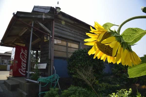 choushi20120728_136b.jpg