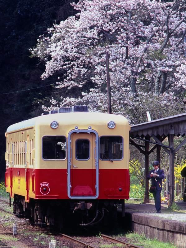 kominatatsukisakisakura201004b.jpg