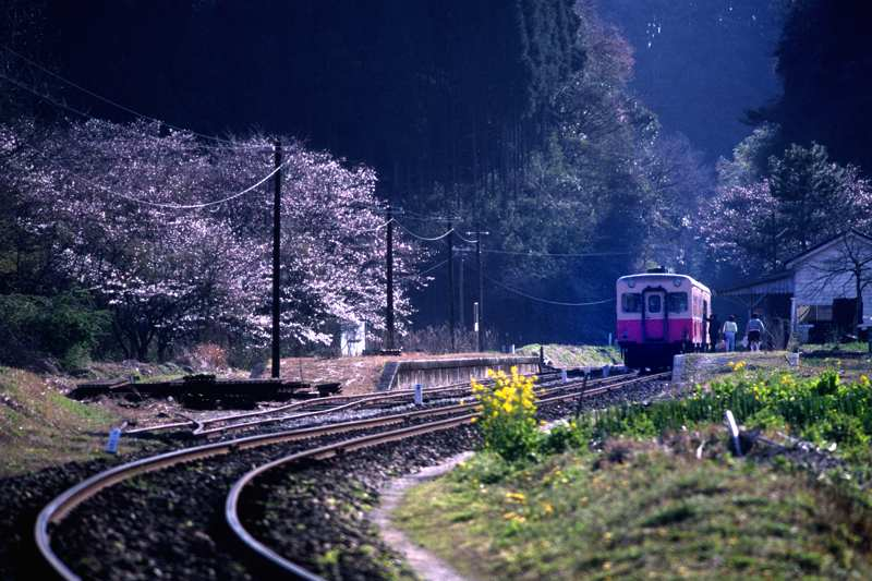 tsukisaki19891.jpg