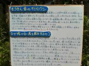 IMG_0383_convert_20110804092054.jpg