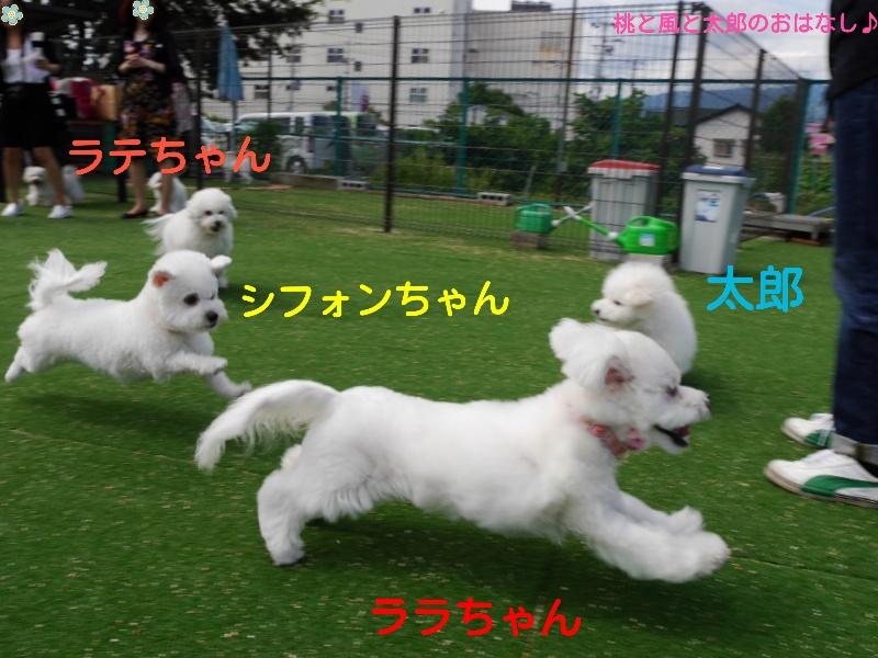 2014092701055218b.jpg