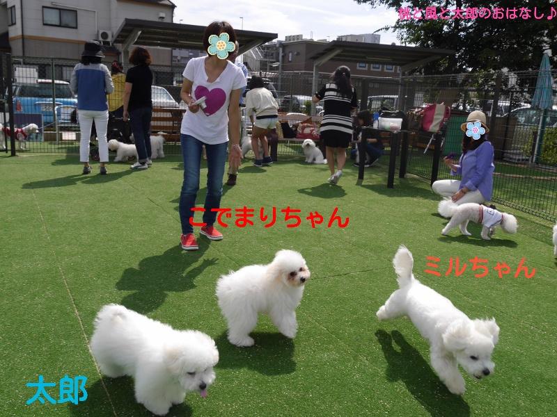 20140927121250fd3.jpg