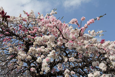 2010桜4.10-4