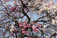 2010桜4.10-8
