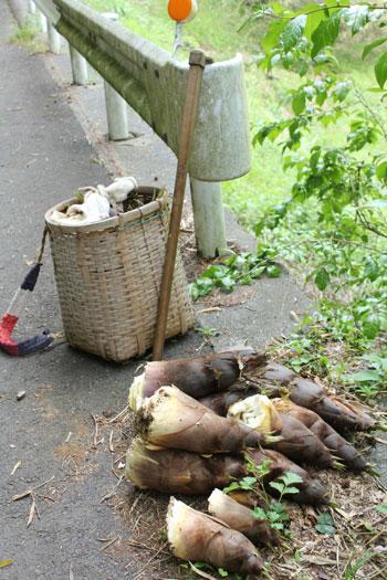 タケノコ掘り3