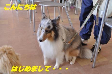 _DSC0095_convert_20110926100208-0.jpg