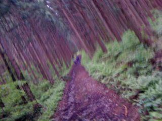 森を散策したり
