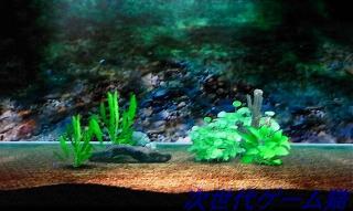 ブルーオアシス水槽3
