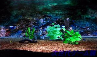 ブルーオアシス水槽4