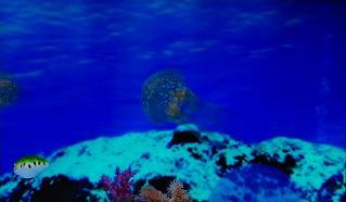 ブルーオアシスタコクラゲ
