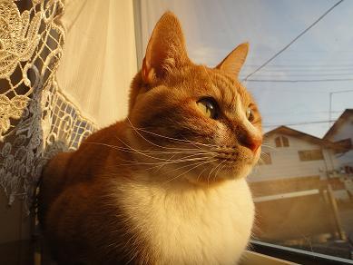 夕焼け猫2