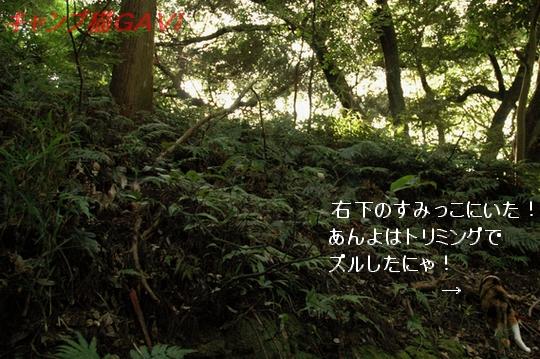 100808_3684b.jpg