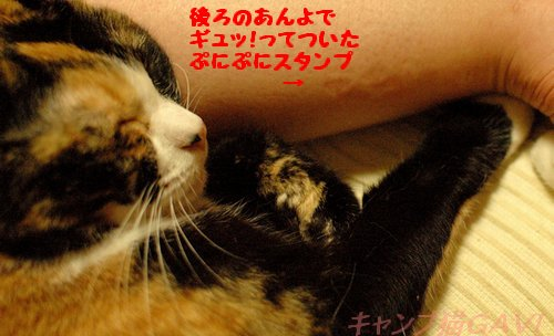 150314_7426a.jpg