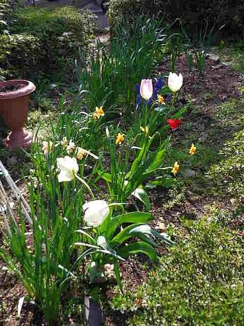 チューリップの植えてある風景