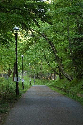 多摩湖への道1