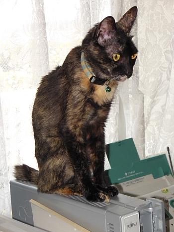 パソコンの上のアビ
