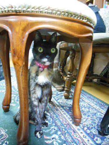 丸椅子の下のアビ