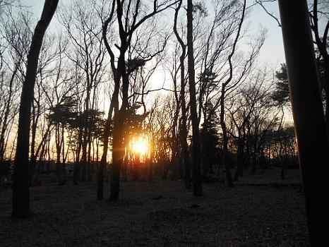 公園の夕陽