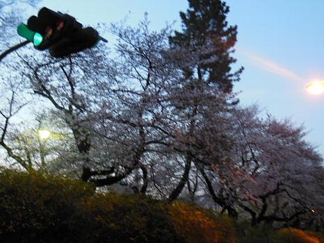 四谷の桜1