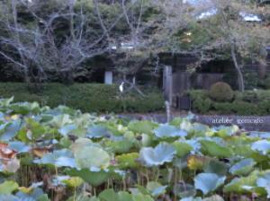 鶴岡八幡宮ー1