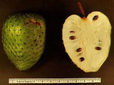 Soursop_fruit.jpg