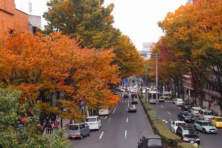 東京・原宿の欅並木の紅葉 (C)表参道・青山・原宿・外苑前・渋谷・源保堂鍼灸院