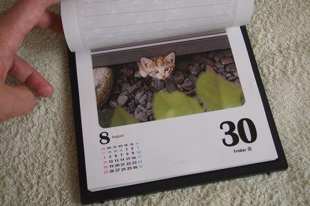 猫めくりカレンダーアイアイ (C)肩こり・腰痛・頭痛・生理痛 表参道の源保堂鍼灸院