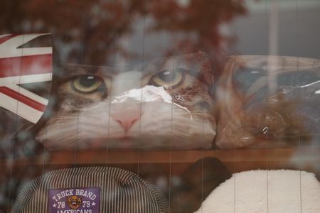 猫の鞄2 (C)表参道・青山・原宿・外苑前・渋谷・源保堂鍼灸院 肩こり・腰痛・頭痛・生理痛など